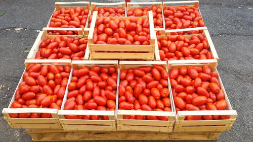 イタリア 料理 トマト 何故