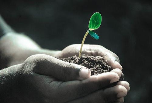 パクチー 栽培 土 作り方