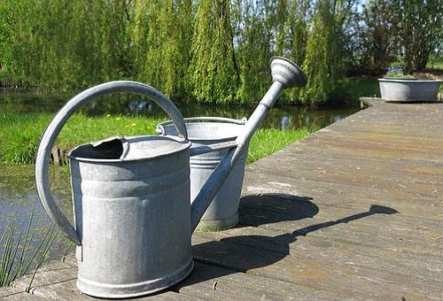 きゅうり 水やり 時間 頻度