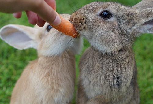 人参 食べる 動物