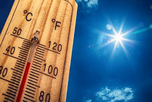 ズッキーニ 保存 夏 温度