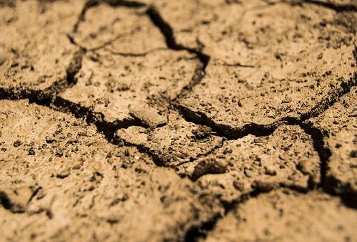 きゅうり 水不足 症状 対策