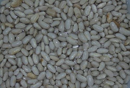 インゲン 品種 白
