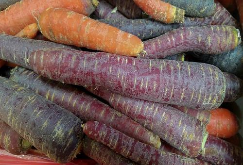 人参 品種 紫
