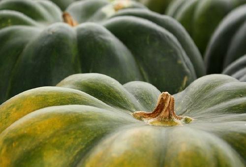 かぼちゃ 栄養素 美容 葉酸
