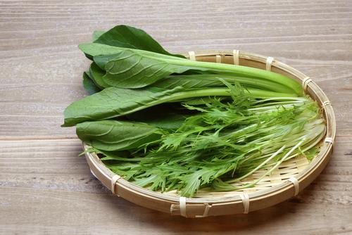水菜 品種 小松菜 レタス 比較