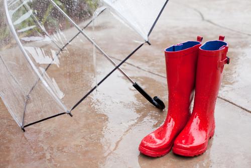 カボチャ 受粉 雨 対策