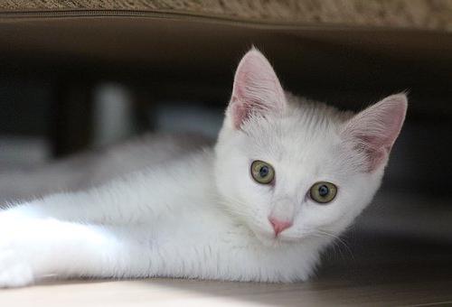 きゅうり 驚く 理由 猫