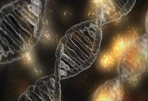 きゅうり 嫌い 理由 遺伝子