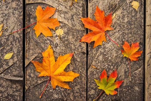 かぼちゃ 秋 季語