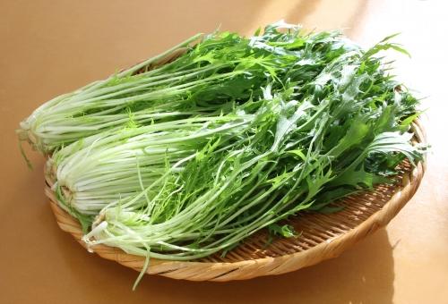 水菜 しなしな 復活 方法