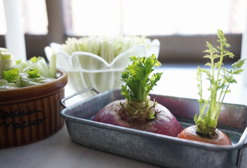 水菜 室内 水耕栽培