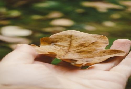 小松菜 枯れる 原因 症状 対策