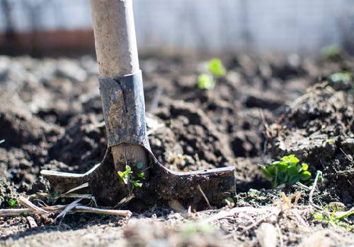 ゴーヤ 土 再生 利用方法