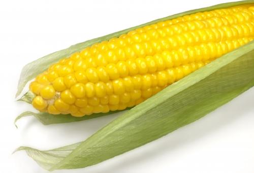 トウモロコシ 主食 国