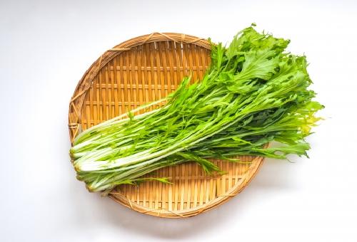 水菜 野菜 種類