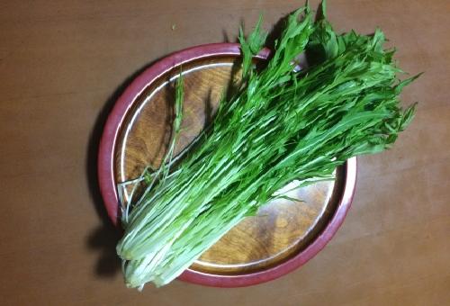 水菜 水耕栽培 収穫 時期