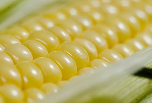 トウモロコシ 輸入量 輸出量 推移 生産量