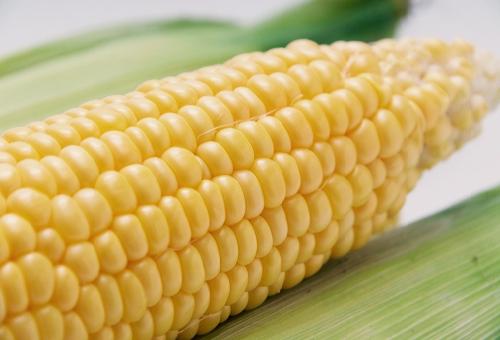 トウモロコシ 受粉 方法 失敗 確認 時間