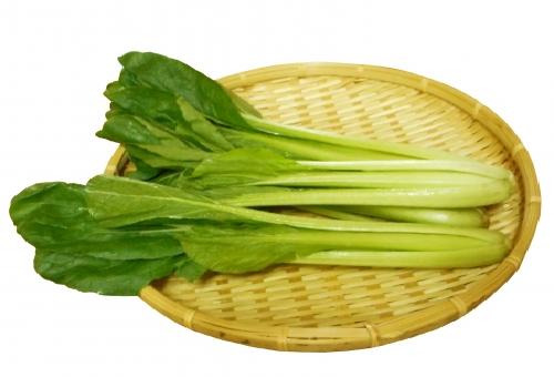 小松菜 収穫 方法