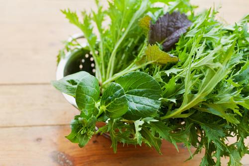 水菜 固い 調理 方法