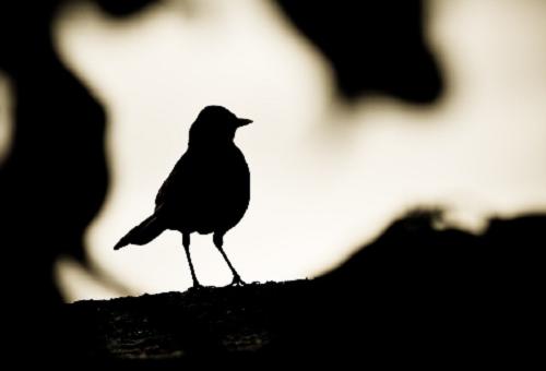 みょうが 似てる 鳥