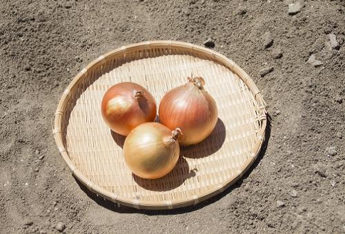 玉ねぎ 農薬 落とし方
