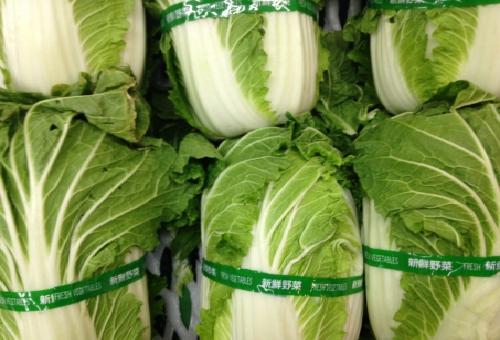 白菜 季節 値段
