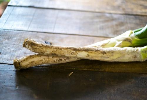 長ネギ プランター 栽培 追肥 再生