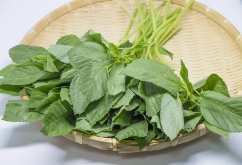 モロヘイヤ 食べ方 炒め 栄養