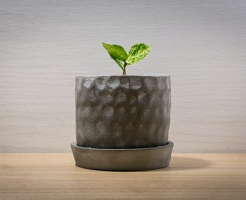 パクチー 鉢植え 育て方