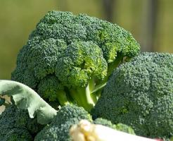 ブロッコリー 効果 栄養