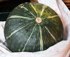 かぼちゃ 国産 農薬