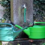 いんげんの栽培!最適なプランターサイズと水やりの方法!