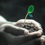 パクチーを栽培するための土!作り方とは?