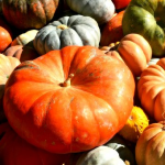 かぼちゃの種類!どんなのが人気があるの?