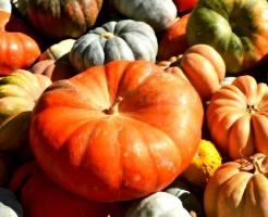 かぼちゃ 種類 人気