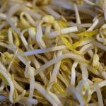 もやしの食物繊維の含有量は?食物繊維は水溶性?不溶性?