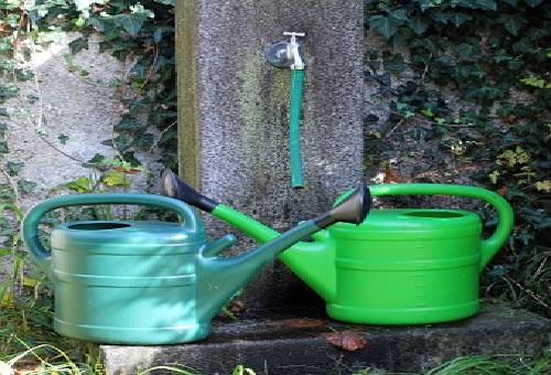 いんげん 栽培 プランター サイズ 水やり