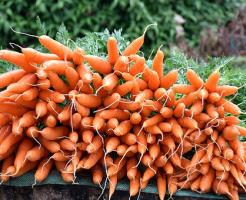 にんじん 害虫 対策 農薬