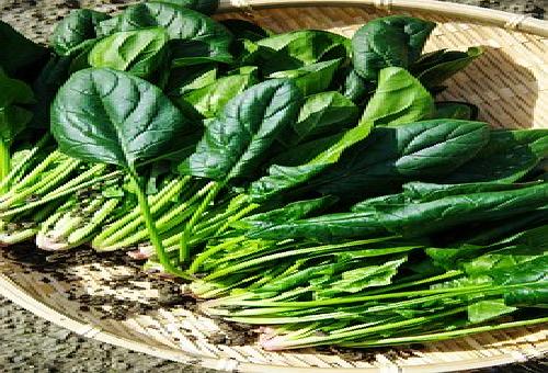 ほうれん草 栄養 茎 葉