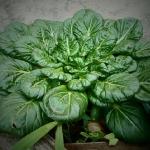 ほうれん草の葉!形によって栄養素の違いがあるの?