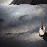 ズッキーニを受粉させようと思ったら雨の予報が!どうしたら?