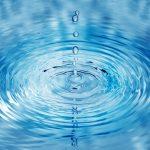 パクチーは水栽培できる?方法や必要なものは?