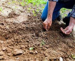 ズッキーニ 種から 育て方 蒔き方