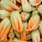 ズッキーニの花も食べられる?ズッキーニの花の値段は?