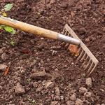 クレソンの栽培に向いている土は?肥料は?
