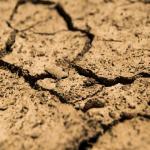きゅうりが水不足になったときに出る症状は?しっかり対策しよう!