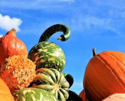 かぼちゃ 保存 夏