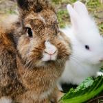 レタスを好んで食べる動物は?レタスは食べ過ぎなければ良い場合もあるの?